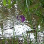 何かな?紫色の花です。